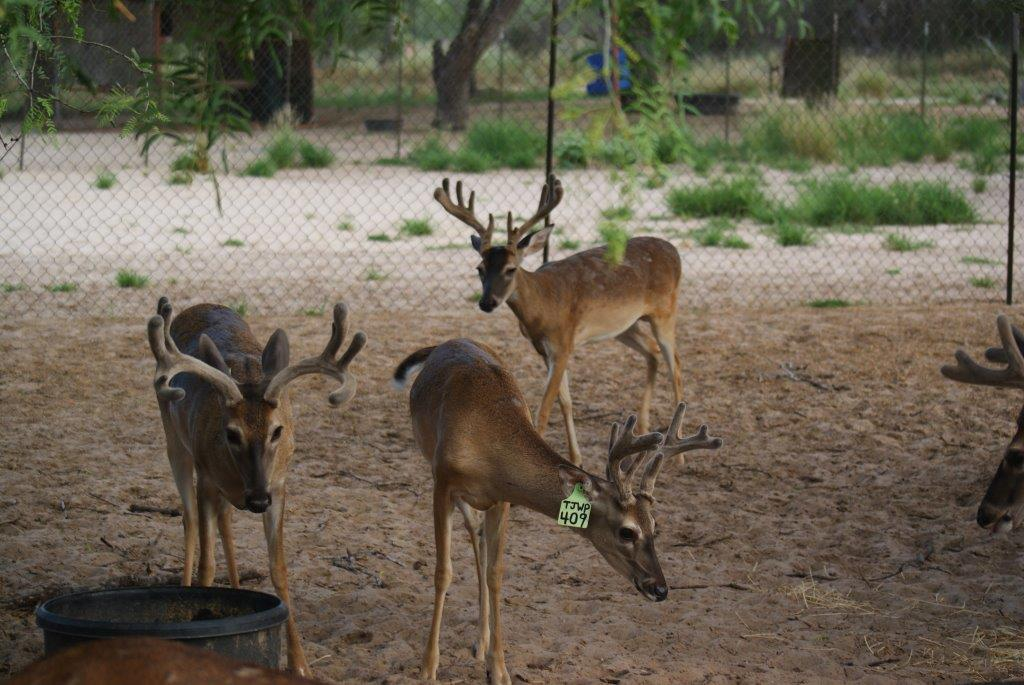 1 Yr old Atascosa Fac group 8-9-15.jpg